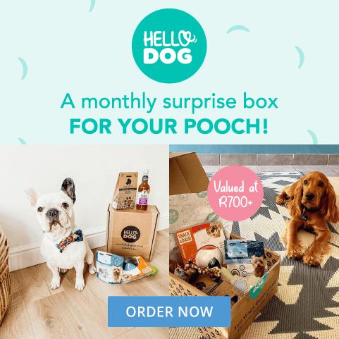 Hello Dog Box - June 2021