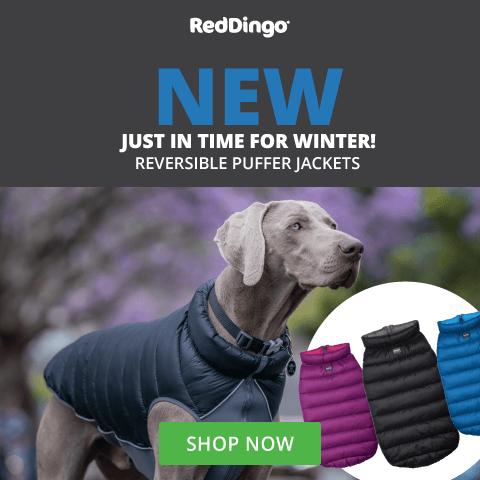 Red Dingo Puffers - June 2021