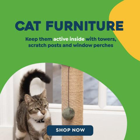 Cat Furniture - Sep 2021