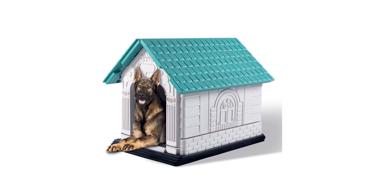 Pet Heaven Buy M Pets Online In South Africa M Pets Loft Dog Kennel Pet Heaven Online Pet Store