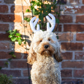 Rosewood Cupid & Comet Metallic Dog Reindeer Antlers