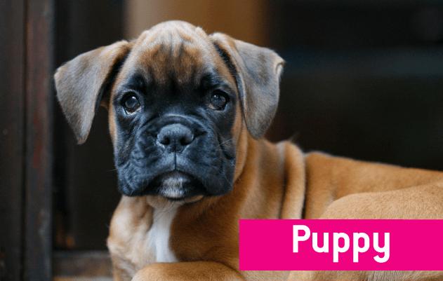 Buy Eukanuba Puppy Dog Food Online
