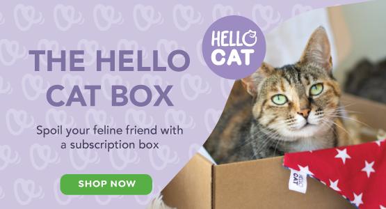 Hello Cat Box