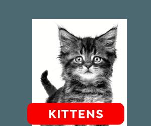 Royal Canin Kittens