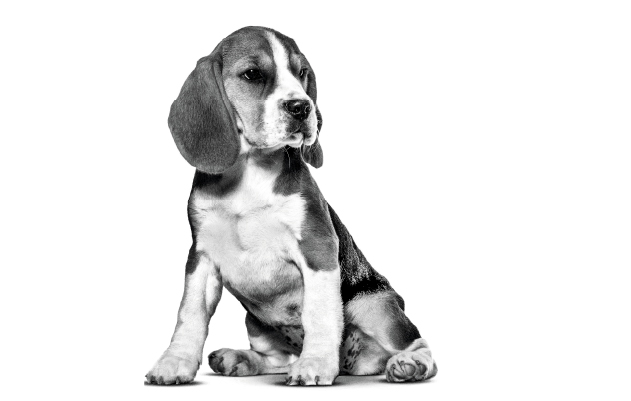 Royal Canin Puppy Food Online South Africa